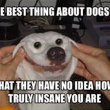 best thing about dogs