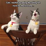cats reaction