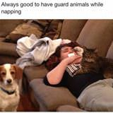 guard animals