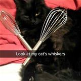 this cats whiskers