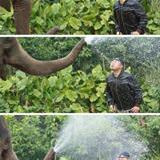 dont mess with the elephant