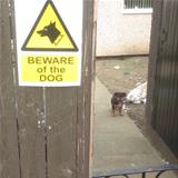 beware the dog