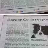 border collie responds