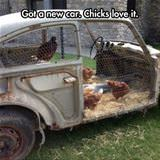 chicks love it