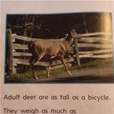 how big are deer