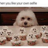 like your own selfie