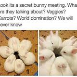 secret bunny meeting