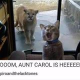 moooom aunt carol is here