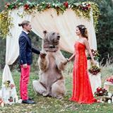 a bear wedding