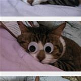 cool cat googly eyes sleeping