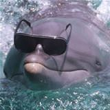 coolest dolphin ever