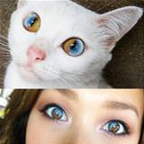 crazy cat eyes