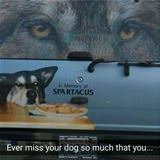 ever miss your dog so much