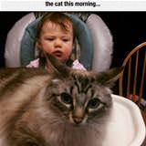 feeding kid before cat