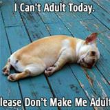 no adulting today