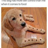 this dogs self control