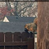 this super fat squirrel