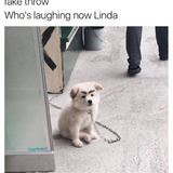 whos laughing now linda