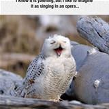 i like to imagine the opera
