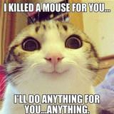 killed a mouse for you