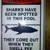 Sharks In This Pool