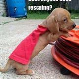 does anyone need rescuing