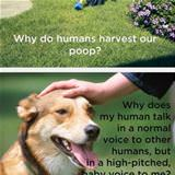 dog shower thoughts
