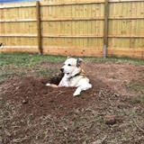 loves digging holes