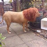 ordered a lion