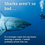 sharks arent so bad