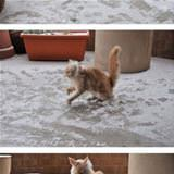 this cat playing in the snow
