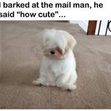 barked at the mailman