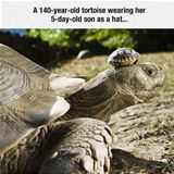 cute tortoise hat
