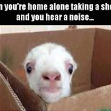 and you hear a noise