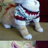 kitten sweater