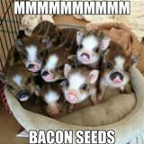 mmmmmm bacon seeds