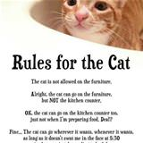 some rules for the cat