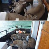 went fishing caught deer