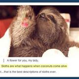 a description of sloths