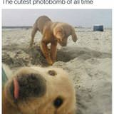 cutest photobomb