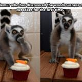 lemur enjoying a cupcake