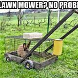 No Lawn Mower No Problem