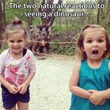 the two natural reactions