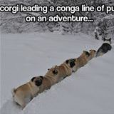 a winter conga line