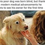 dog was born blind