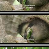 sloths are great