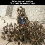 why you dont feed the monkeys