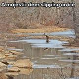 majestic deer slipping