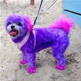 the all purple dog