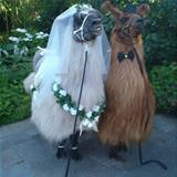 A Wonderful Wedding